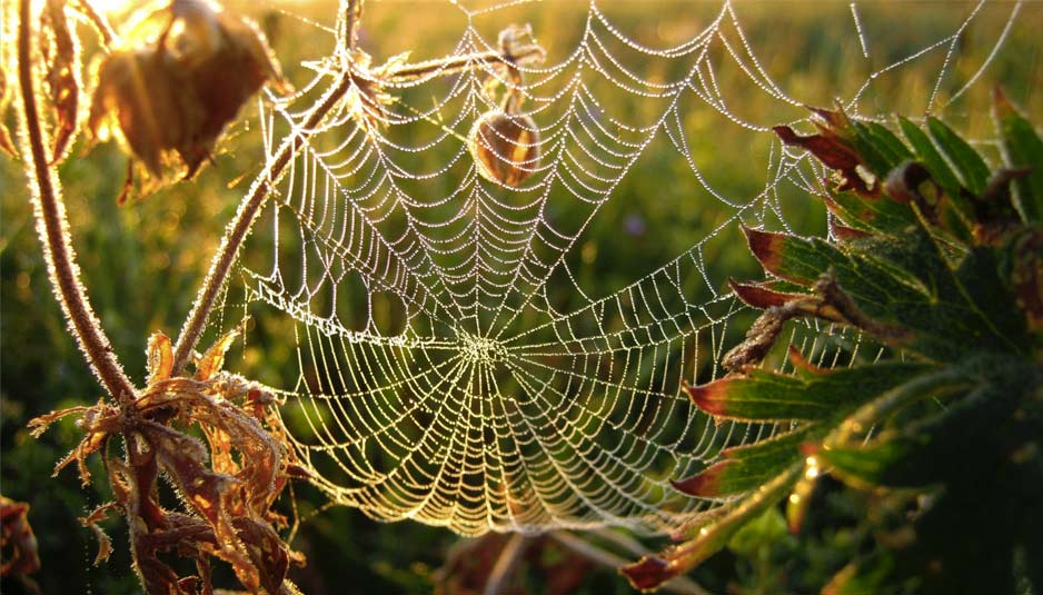 Blockhouse Bay Primary School - Spiders spinning webs