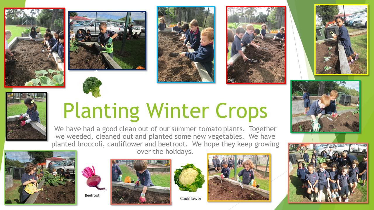 Blockhouse Bay Primary School - Planting in the Garden